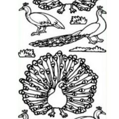Large Peacock Etching & Sandblasting Sticker Sheet