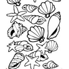 Conched Out Sea Shells Etching & Sandblasting Sticker Sheet