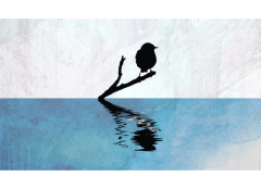 Bird Reflection Simple Screen™ Ready to Use Stencil