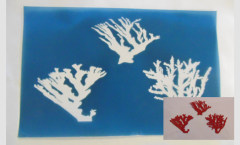 Simple Screen™  Pre-burned Coral Set for Screen Printing & Powder Printing